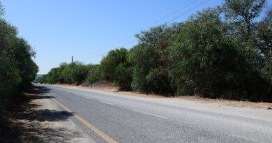 estrada-florestal